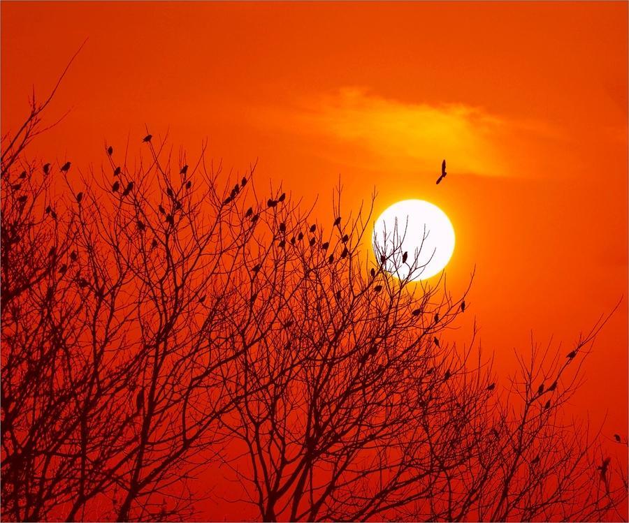 写秋天最美的唐诗,颇有王维风采,今天已经进入语文课本
