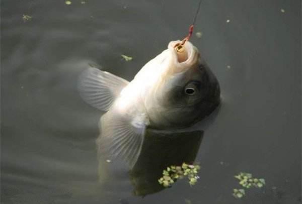 夏季钓鱼总不上钩?30年的江湖老钓友教你用这几招让你渔获满载而归!(图2)