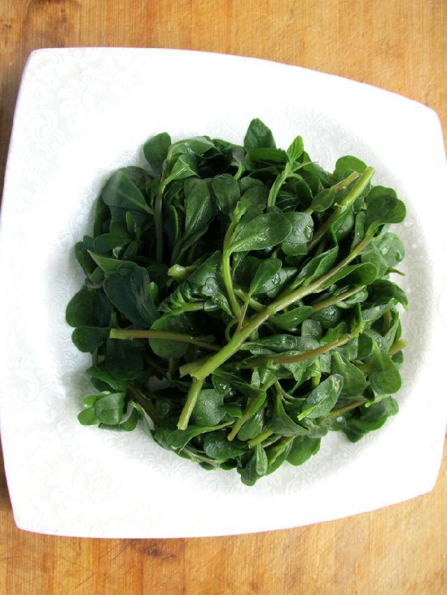 这款凉拌马齿苋健康养生菜, 不妨一起来试试