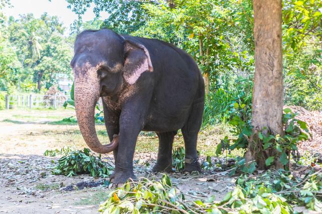 它不是世界上最大的大象孤儿院,却能和大象亲密接触,游客喜欢来