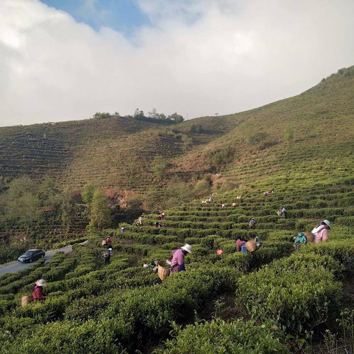 黄建林:茶味淘金塘