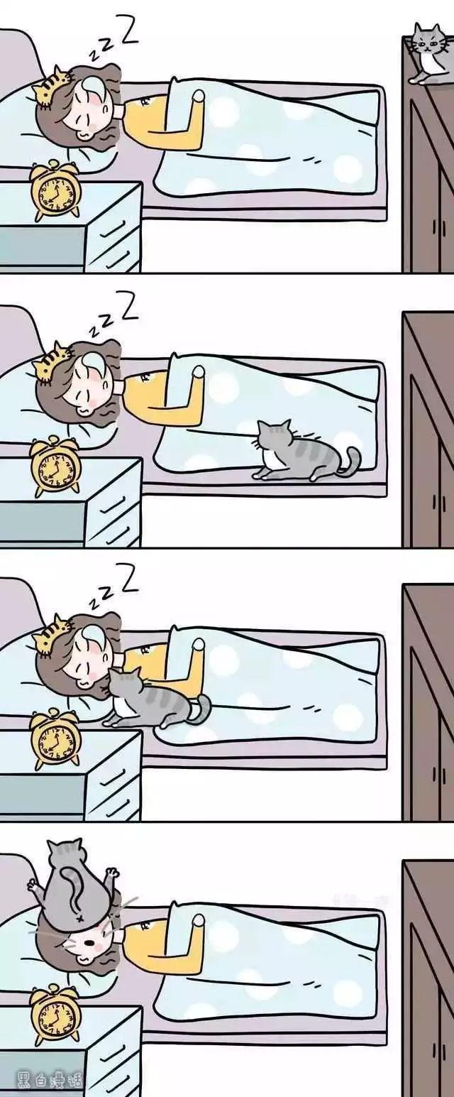 猫咪迷惑行为图鉴