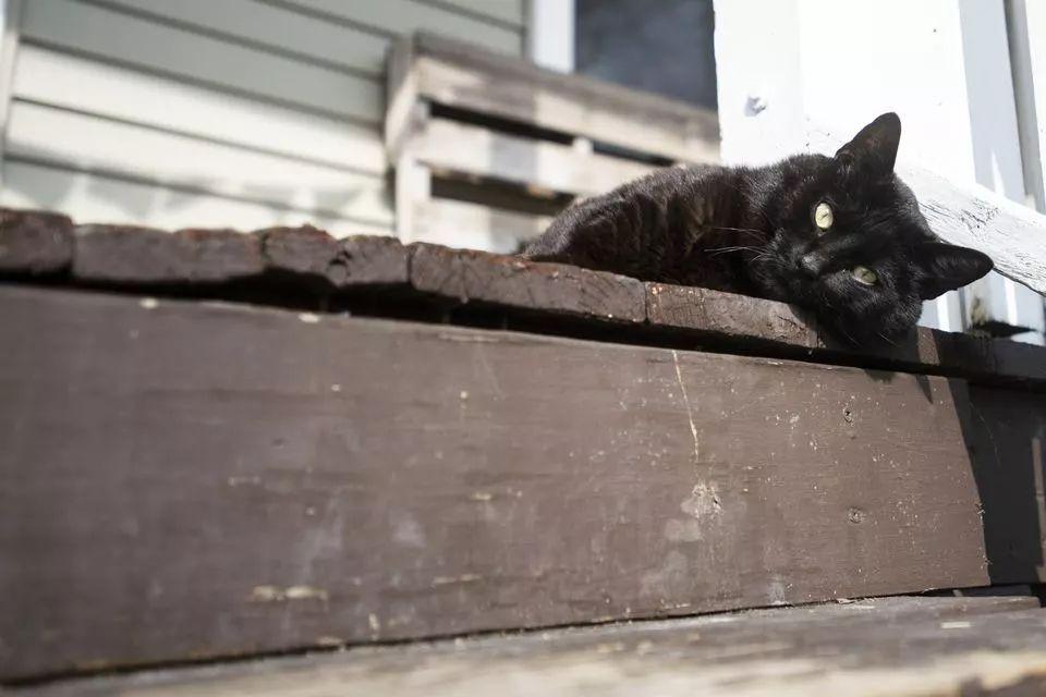 猫 loki