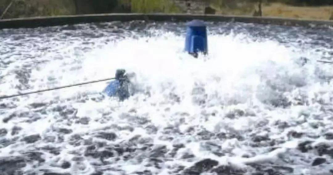 使水体缺氧的原理是什么_鸡毛当剑使是什么意思