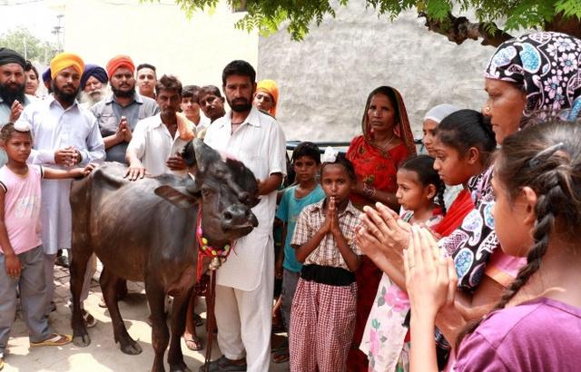 印度一头牛脸上竟长了三只眼睛一条象鼻,被村民奉为神明
