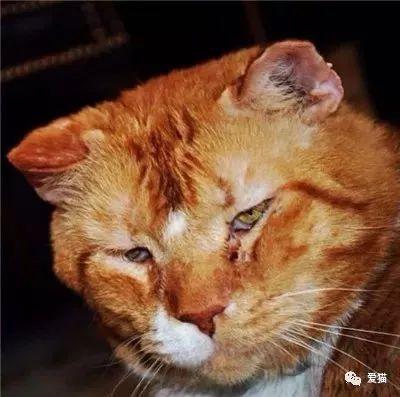 老橘猫脾气臭患有猫艾滋,无人领养,书店主人抱回家后却成了网红!