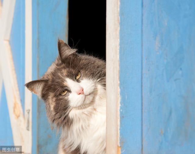 """猫咪并非""""扑克脸"""",可以通过这些部位变化来判断它的心情好坏!"""