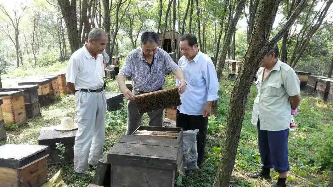 家家户户都能养的蜜蜂,一箱 = 5个人赚钱?