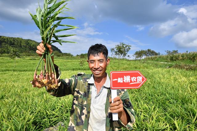 原创            拼多多三大优势扶贫 一年卖653亿元农产品