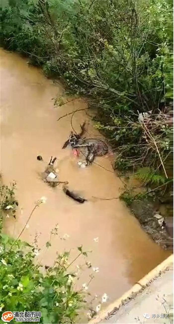 好惊!福旺一男子疑似酒驾摔进河里,找到时已