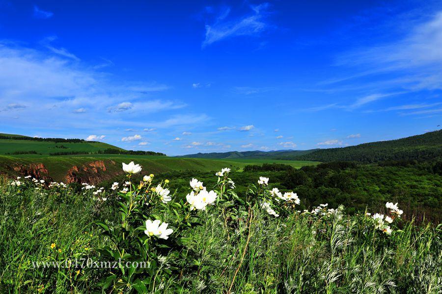 6月呼伦贝尔那达幕摄影旅游经典行程推荐