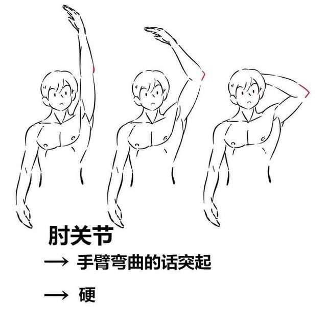 手臂结构绘画教程