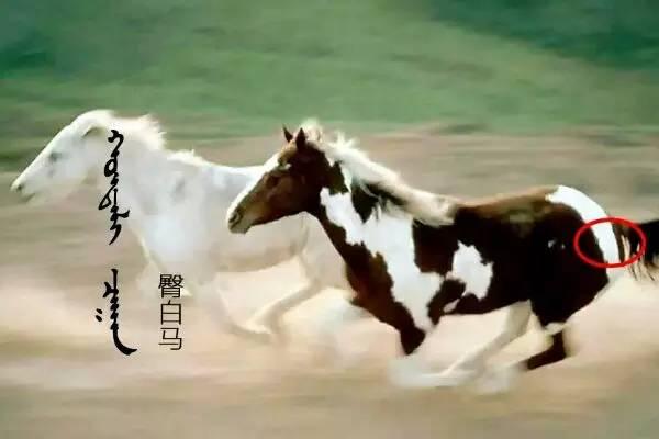 世界名贵骏马,开眼了