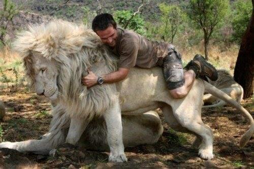 美科学家发现史上最大狮子,比野牛还大,一头相当于如今十头