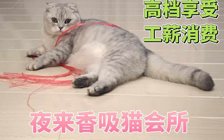 三次元吸貓:是貓就可以,二次元吸貓:有耳朵就可以!