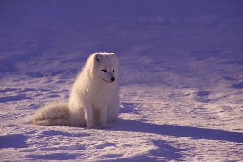关于动物们的冷知识 猫居然不会对同类喵喵叫