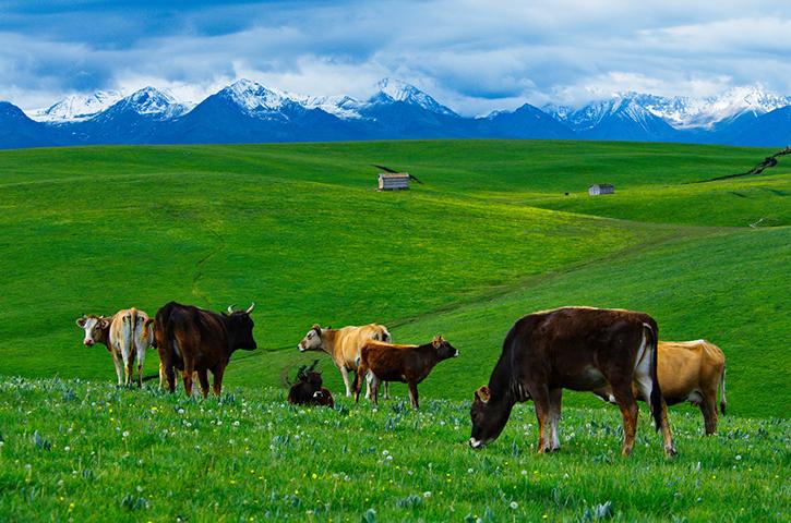 2019端午适合旅行赏花的景点 结伴新疆伊犁看花