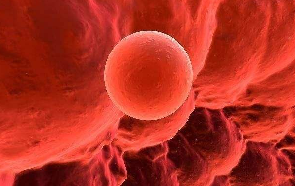 排卵期,精子进入女人体内会有什么反应?