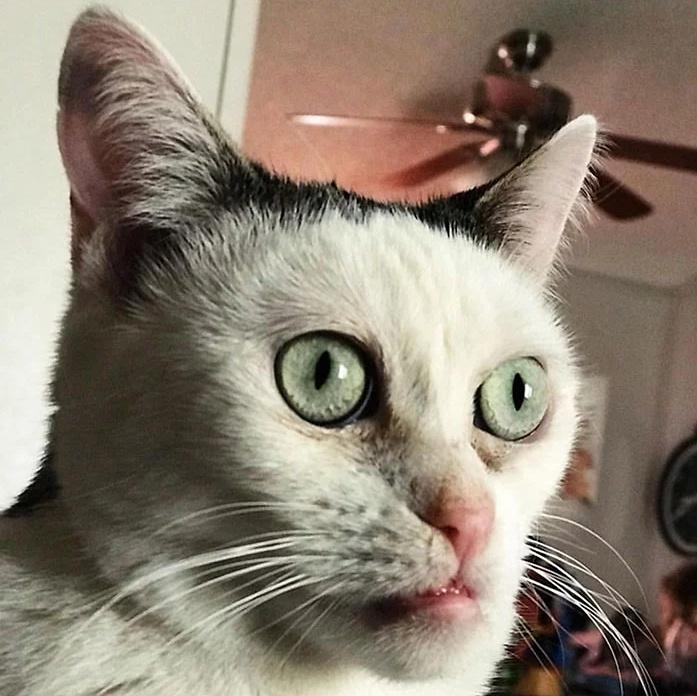 """原创 长了一张""""猴脸""""的猫,出生两天后就被遗弃在收容所"""