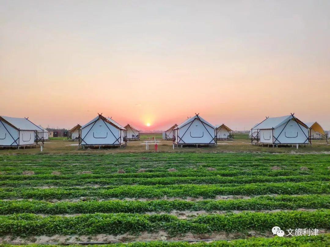中国·垦利郝家第十三届葡萄文化旅游采摘节将于8... _大众网东营