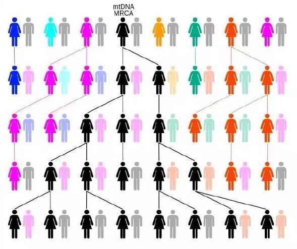 <b>从未见过的堂兄杀了人,你的DNA是关键证据</b>