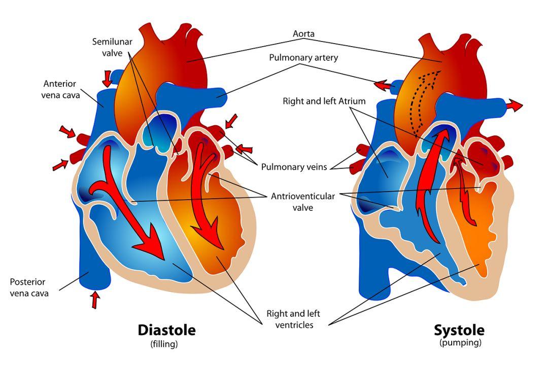 糖尿病患者为什么容易合并心血管疾病呢?