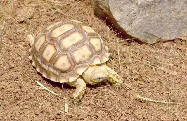 乌龟 王八 甲鱼 鳖的区别