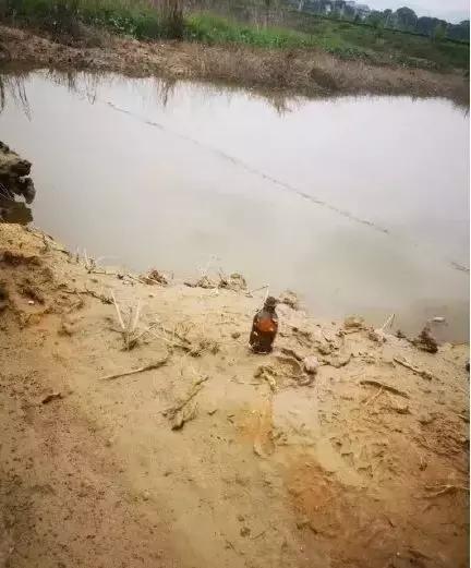 尸横遍野,熊孩子毒死了千斤小龙虾 !吃货和虾农一起在哀嚎~