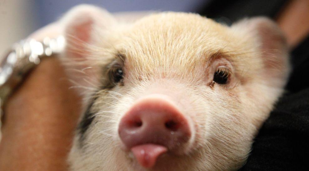 """5月属猪人的财运也很不错,这主要是因为在5月有吉星""""武曲""""入"""