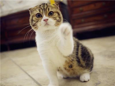 宠物猫跟家猫图片