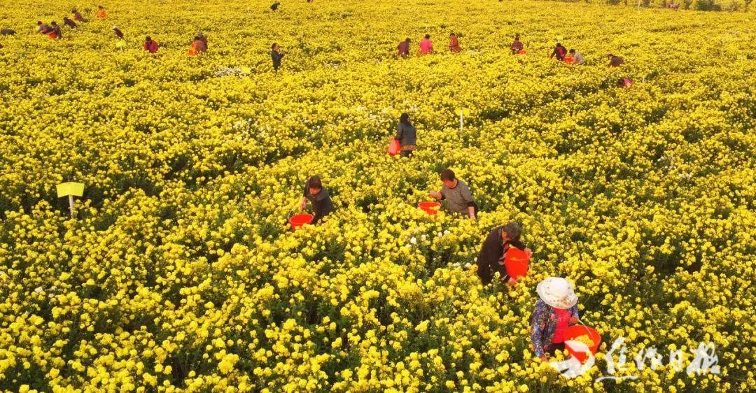 修武县连创19项全国高产纪录!太行山脚下的优质农业实践登上《光明日报》