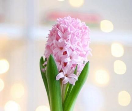 善人自有善人福,6月出头遇桃花,人见爱,花见开的3大属相