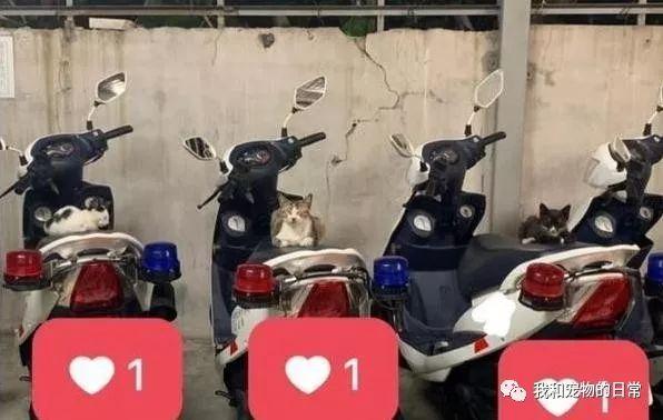 <b>警察准备出动,惊见3萌猫趴机车坐垫呼呼大睡,该叫醒它们吗?</b>