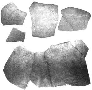 考古学中的数学 鸵鸟蛋的表面积是多少