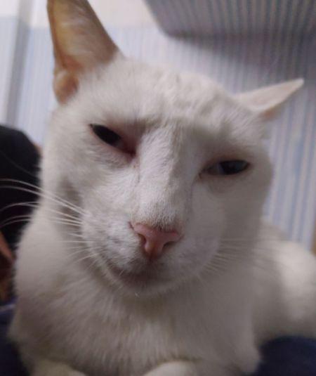 少儿不宜!猫有多猥琐你们知道吗!