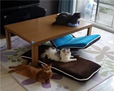 这只猫超霸道,主人用什么,它就霸占什么,连人都是它的!