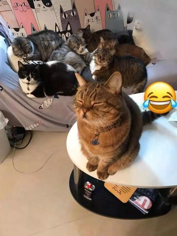 养猫大户的日常体验:每天都是大型吸猫现场!