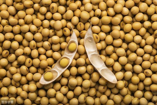 原创             特朗普惹的祸,美农来买单!中国减少进口后,美豆价格跌回10年前
