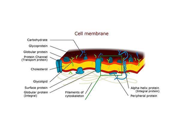 """研究拍摄到免疫蛋白通过""""打洞""""杀死细菌!"""