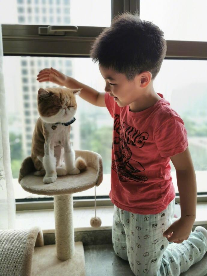 胡可曬小魚兒和貓玩耍照 網友:竟然能和諧相處?
