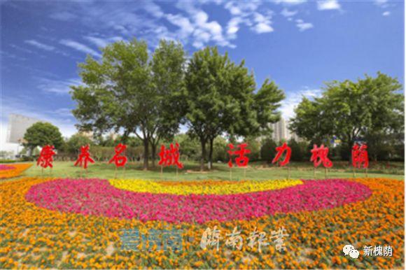 槐荫:初夏时节,经十西路花团锦簇生机盎然
