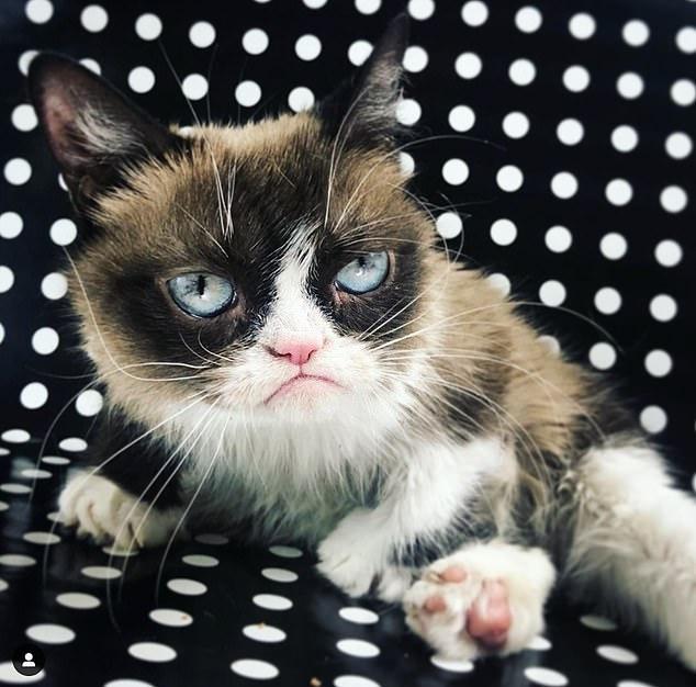 原创网红不爽猫不幸去世!享年7岁!曾为主人带来一亿美元收入!