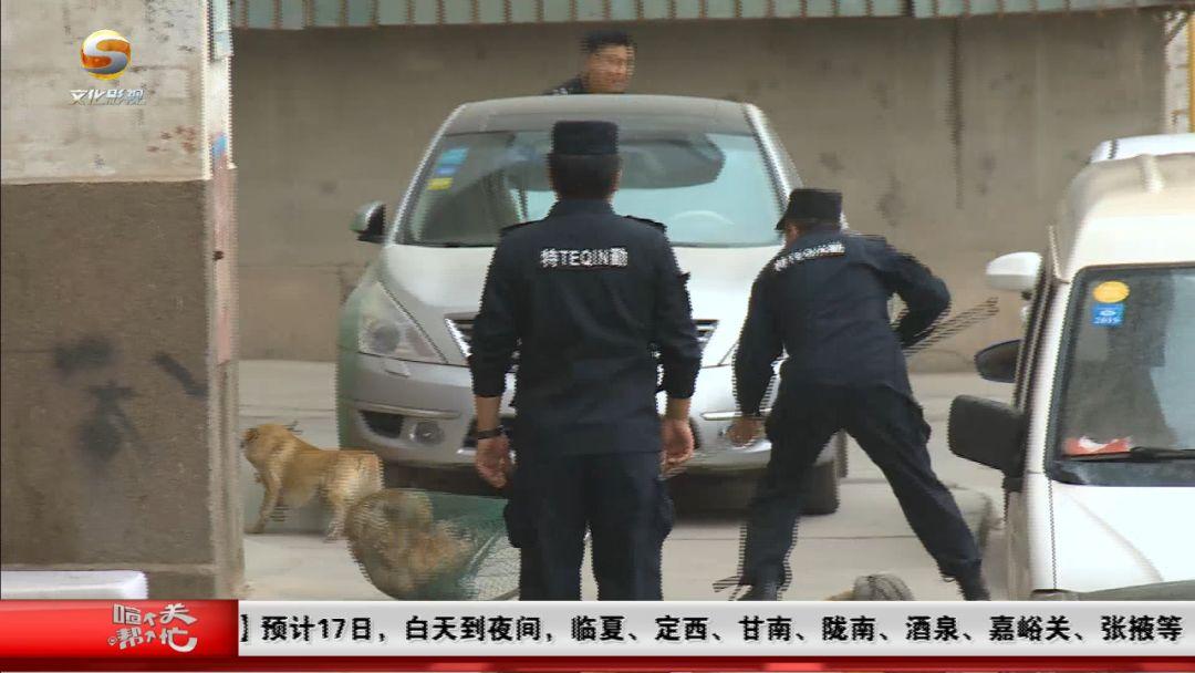 兰州对流浪狗进行抓捕,送往动物留检所统一收容,看看市民怎么说!