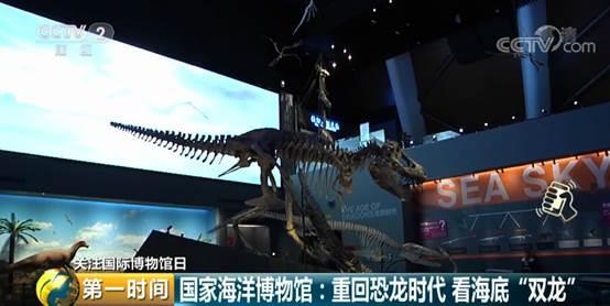 恐龙头比猫头还小?海里也有恐龙?这个博物馆一定要去!
