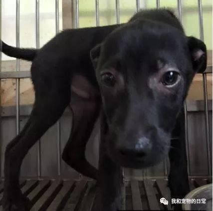 4只小黑狗逃过死劫,最后却这样坎坷!
