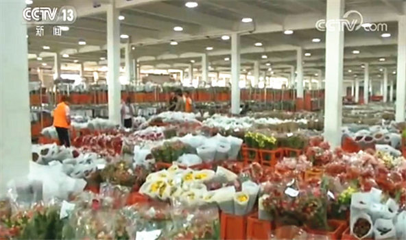 今年一季度 云南鲜花出口增长超8成_云南鲜花批发