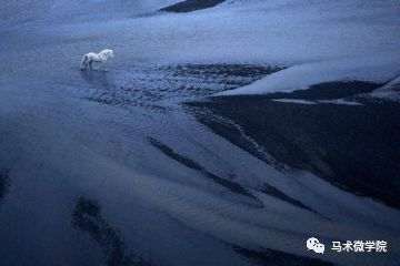 久久热视频99rcom_99%的人都不了解的冰岛马,快来看看吧!