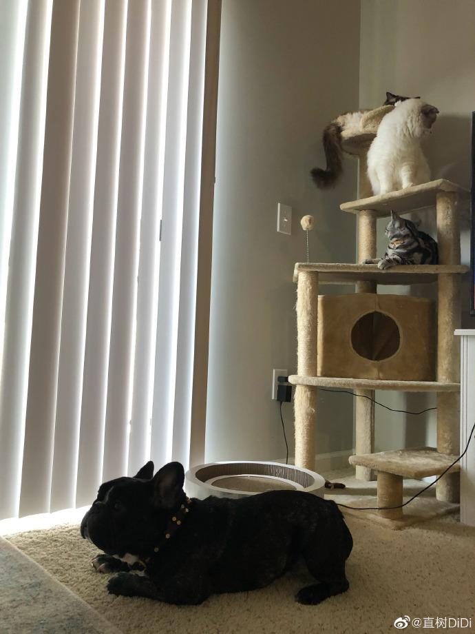 优优艺术撸一撸_日常铲屎官,一日不撸猫难受!