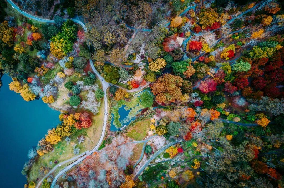 这个秋天只做一件事【赏枫叶】|全澳最美的枫叶小镇攻略,自驾游走起!