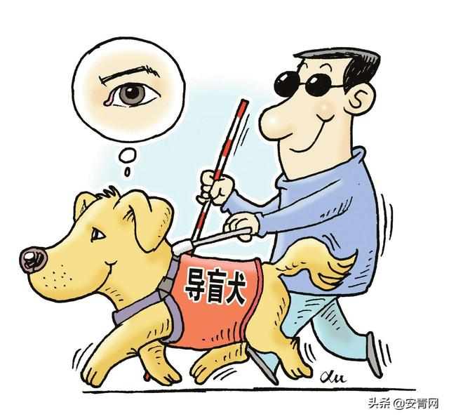 安徽拟出台无障碍环境建设管理办法 公共场所、交通工具不得拒绝导盲犬